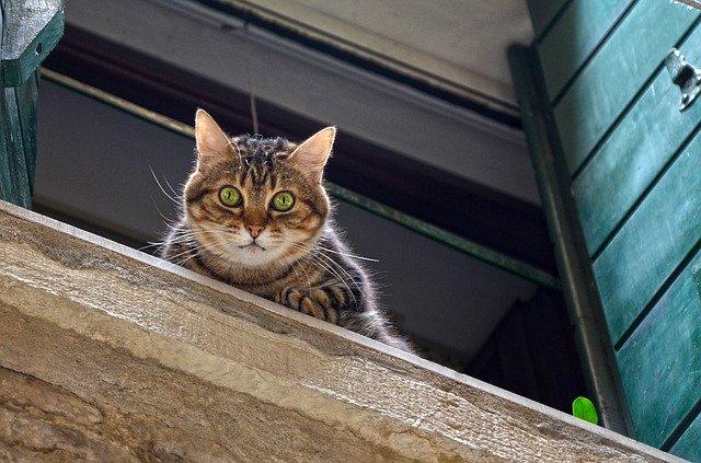 Mačka na parapetnej doske pozerá von z okna.jpg