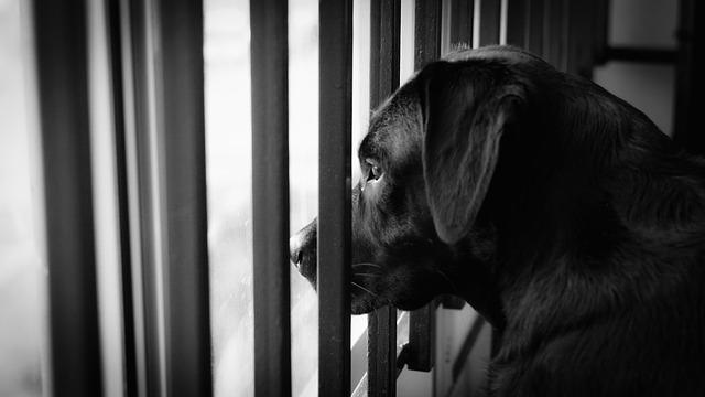 Čierny pes na balkóne, mreže.jpg