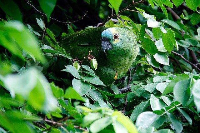 zelená, papagáj, džungľa.jpg